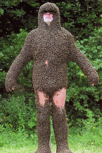 bee body.jpg